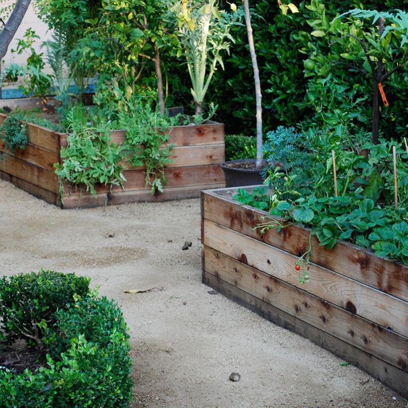 Wangner-Street-Garden-Design